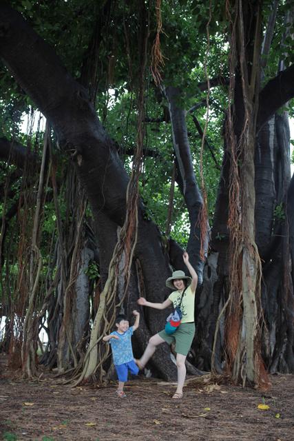 hawaii_tree_genchi2